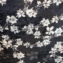 Catifea cu flori albe