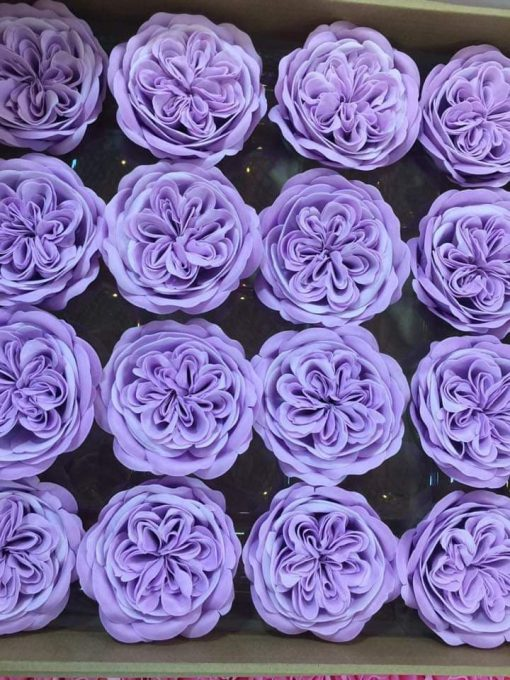 Flori bujor de sapun